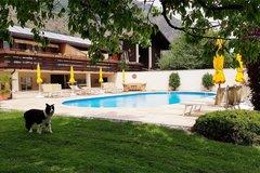 Pool mit Hund Speedy