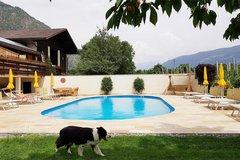 Schwimmbad und unser Hund Speedy